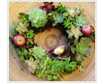 Christmas Surprise Succulent Wreath
